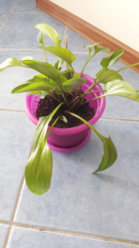 10 комнатных растений семейного счастья (10 фото)