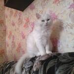 Что изменится для кота/кошки если возьмешь домой?