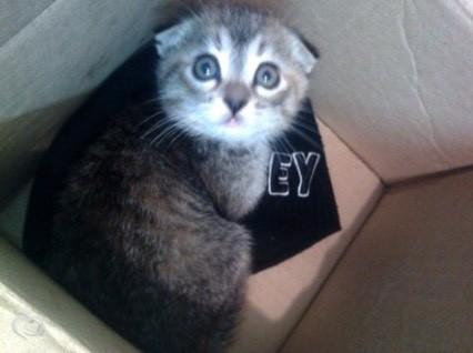 Подскажите имя для котенка
