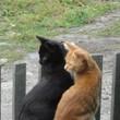 Великогубские коты2